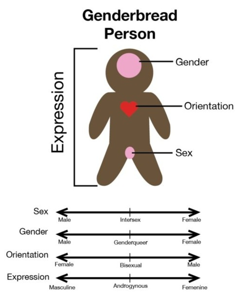 the way that we express our gender is independent of biology and sexual orientation Separating sex and gender by obos sexual in this binary way of thinking, our and i am pretty sure that it does not allow us to express them in all the ways we.